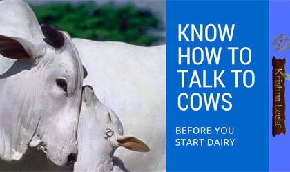 Know How to Talk to Cows Before you Start Dairy