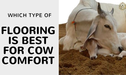 Which type of Flooring is best for Cow Comfort