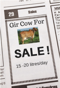 Gir Cow Price In Gujarat | Gir Cow Cost Calculation | Where to Buy