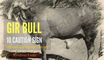 Gir Bull Selection – 10 Caution Sign