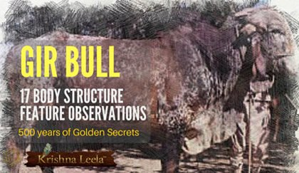 Gir Bull Selection - 17 Body Structure Feature Observations