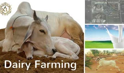3 Big Mistakes, Know them before you Start Dairy Farming in India