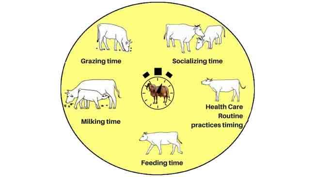 Daily Dairy Farm Routine
