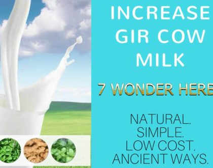 Increase gir cow milk 7 wonder herbs