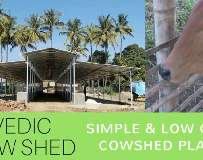Simple Cowshed Planning & Design